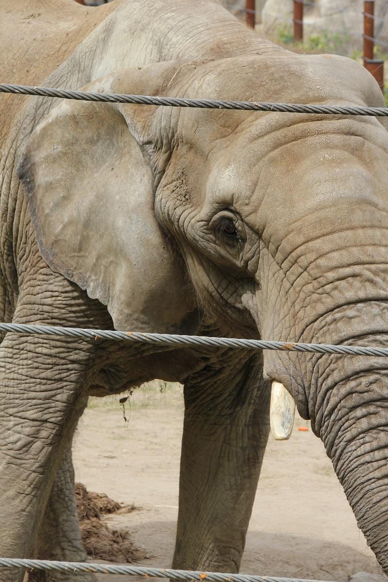 Zoo-oder-Tierpark-BineLovesLife-Elefant