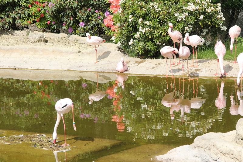 Zoo-oder-Tierpark-BineLovesLife-Flamingo