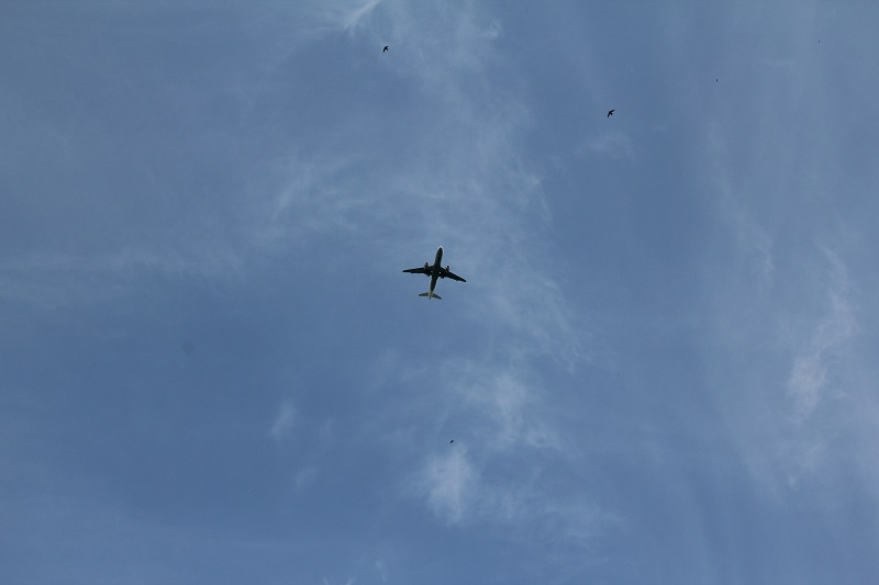 BineLovesLife-Lieben-Erziehen-Loslassen-Jetplane