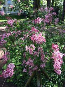 Der-perfekte-Hochzeitsstrauss-Flowers-BineLovesLife
