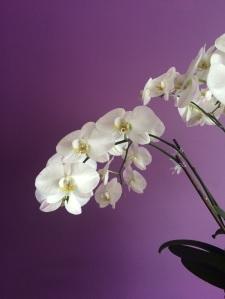 Der-perfekte-Hochzeitsstrauss-Orchidee-BineLovesLife
