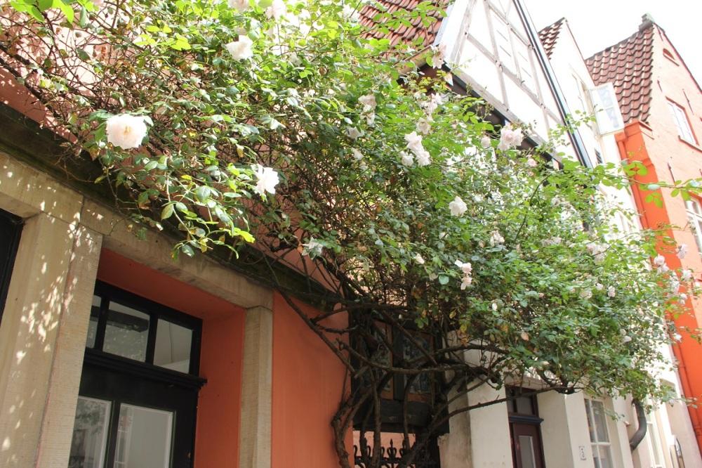 Bremen-48hours-FamilyFriday-Flowerlove-BineLovesLife