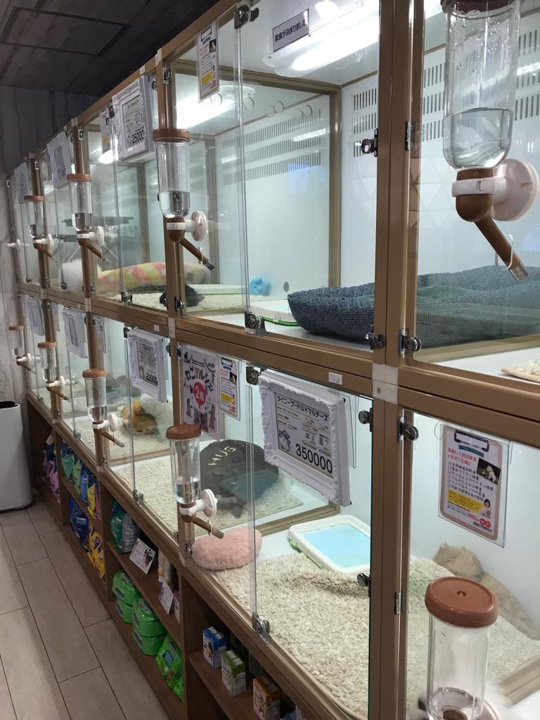 Hundekauf in Tokyo BineLovesLife