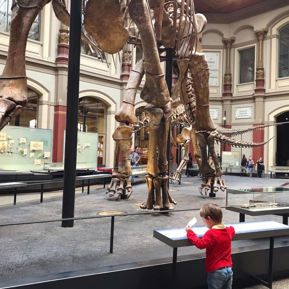 Naturkundemuseum Berlin BineLovesLife