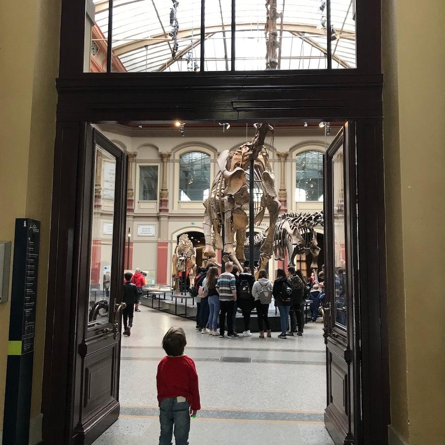 Naturkundemuseum Berlin Dinosaurier BineLovesLife