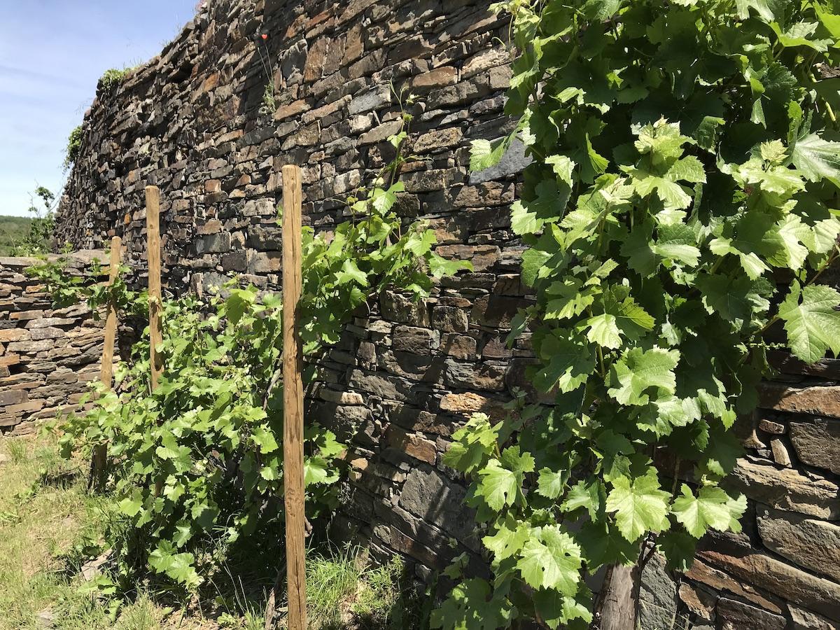 Burg Are Wein BineLovesLife
