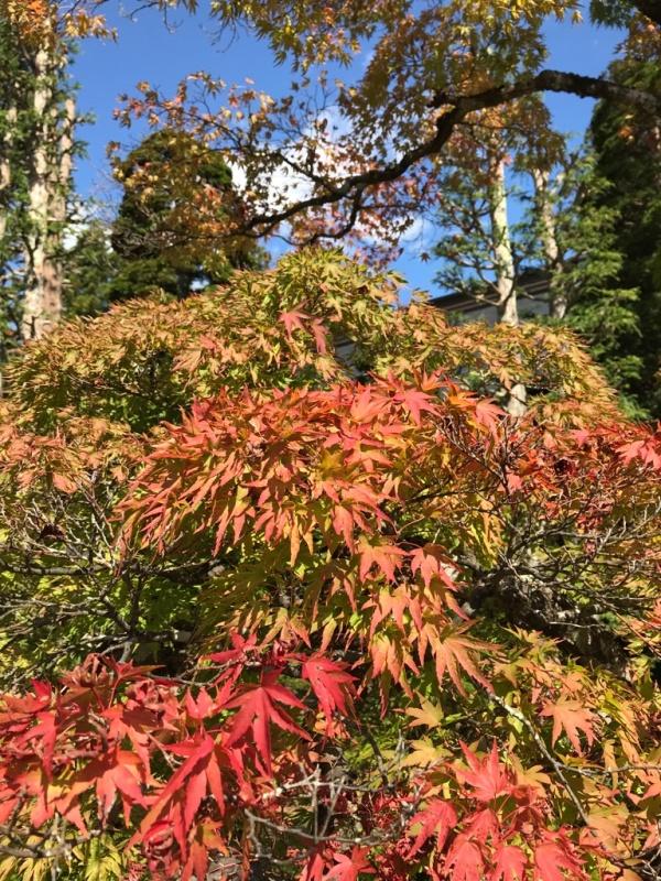 Herbst in Japan TravelTuesday BineLovesLife