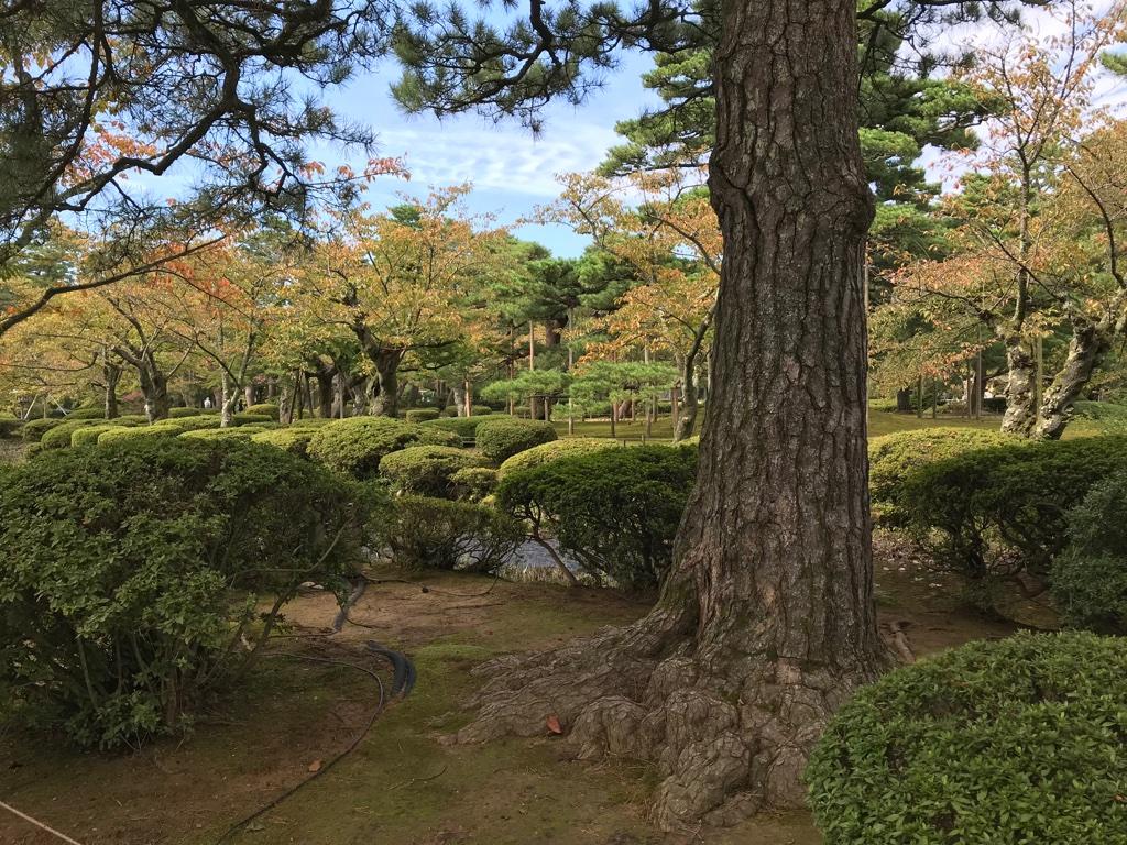 Kenroku-en TravelTuesday BineLovesLife